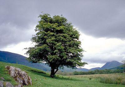 Primo assaggio della Scozia